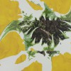 soko/koko-1 [sunflower(向日葵)]